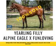 Alpine Eagle Filly joins #TeamRBR