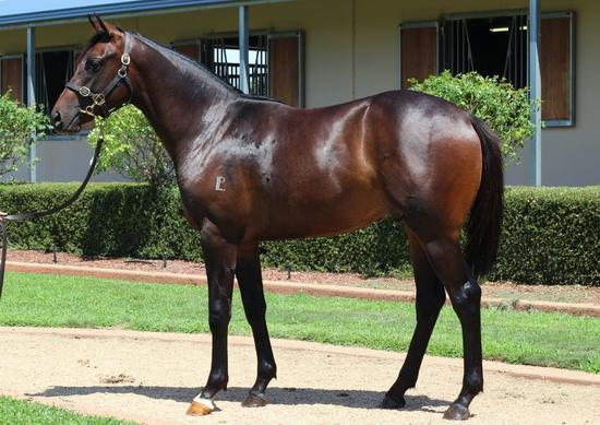 Melbourne Premier Yearling Sale Success