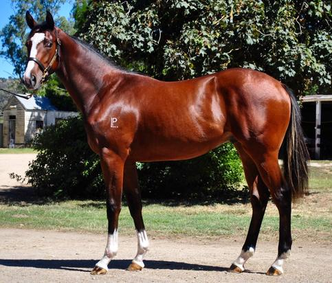 LOT 416 Canford Cliffs X Yes I Will