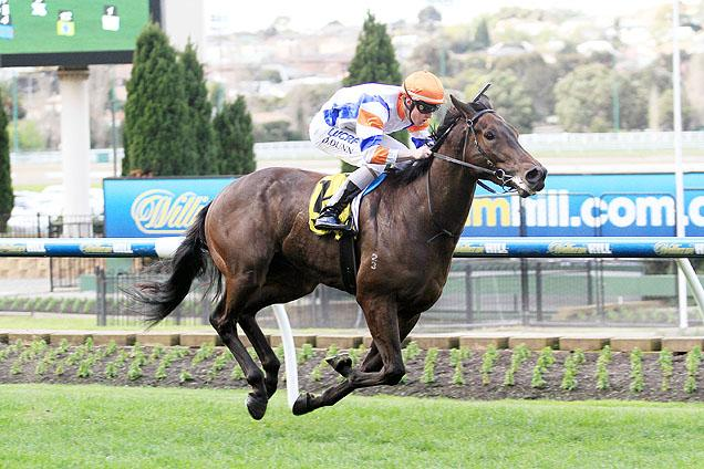 Caulfield Guineas An Option For Stutt Stakes Winner Hey Doc