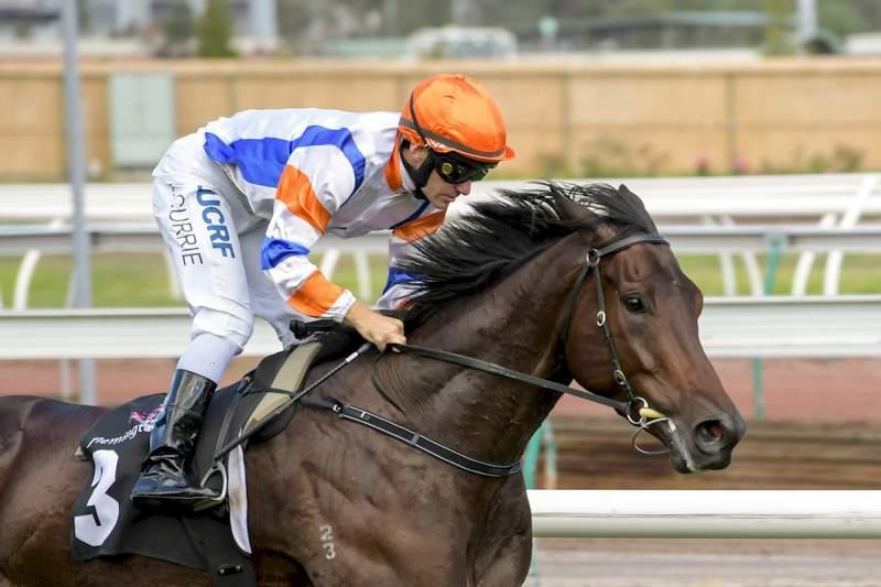 The Yarram Doc is Guineas bound