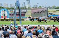Stable Runners For The Gold Coast Meeting On Saturday