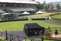 Matthew Dunn Stable Runners For Rosehill On Saturday