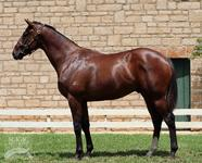 Outstanding Sizzling Colt, Same Family Of Golden Slipper Placed Tulip