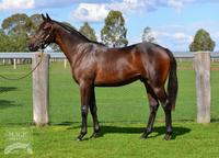 Lot 219 By Rothesay Out Of A Zabeel Mare In Racey Smytzer Brown Colt