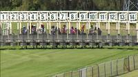 Stable Runners For Ballina On Saturday