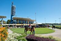 Stable Runners For The Sunshine Coast On Saturday