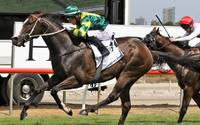 Care To Think Dominant In His Barrier Trial Win This Morning At Rosehill