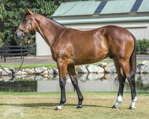 Our Second Offering From The Magic Millions Sale A Bay Colt By More Than Ready X Atlantic Queen