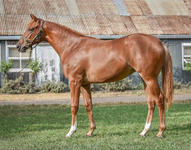 More On The DAWN APPROACH x ILLINOIS GIRL Filly