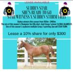 Current Leases Available STAR WITNESS X SUDDEN STORM Filly