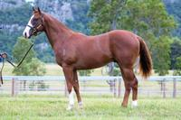 More On The Snitzel X Miss Charming Colt