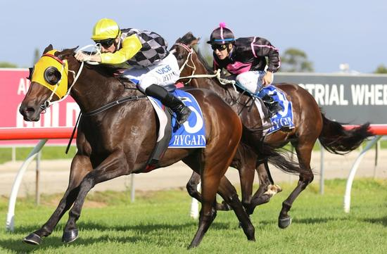 Saxton Rock Runs A Solid Placing At The Gold Coast Under Clayton Gallagher