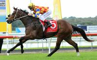 The Fire Trap To Compete At Rosehill On Saturday Under Hugh Bowman