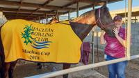 Holidaying Trainer Wins Grafton Carnival Title