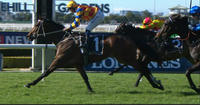 The Fire Trap Put In A Smoking Hot Display To Win Under Hugh Bowman At Rosehill