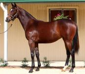 Only one quality yearling left, get in quick!!