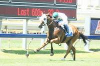 Fly With Me enters the winners stall