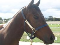 Face The Front on trial for Derby