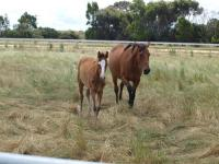 Laming Racing welcomes another baby