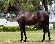 A BARGAIN FILLY FROM THE CLASSIC SALE