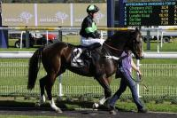 DESTINED TO WIN CONTINUES HOT STREAK