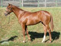 Two more from 2016 Gold Coast Magic Millions Sale!