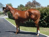 Bargain filly joins the Proven Thoroughbreds team