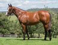 Quality NOT A SINGLE DOUBT filly joins Proven Thoroughbreds