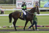 Successful QLD debut for Lothario
