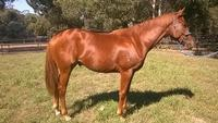 Metro Double to JIMMY CHOUX Adds to Appeal of John Thompson colt