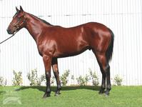 Exceptionally priced colt by under-rated sire!