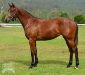 More Than Ready filly joins Proven Thoroughbreds