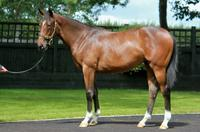 Three exceptionally priced yearlings from Karaka!