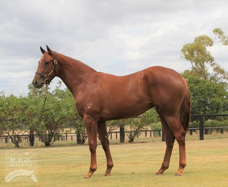 Sebring filly rounds out Magic Millions acquisitions