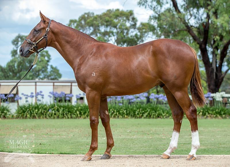 Eurozone colt out of stakes winning mare!