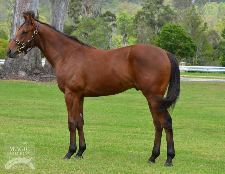 Colt from a Redoute's Choice mare secured for $60k