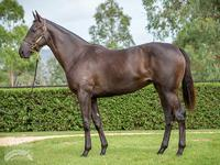 Proven picks up two at Adelaide Magic Millions Yearling Sale