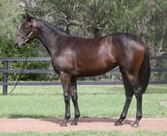 Two bargain yearlings from Melbourne Premier Sale