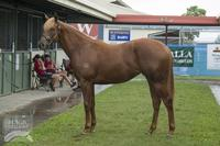 Two fillies with Magic Millions and QTIS bonuses!