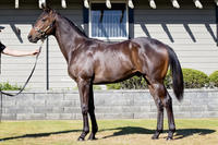 Trio of NZ colts join Proven Thoroughbreds