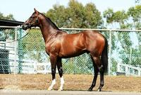 Proven Thoroughbreds ups the ante with high quality stallion prospect