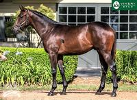 DISSIDENT colt first buy for 2018!