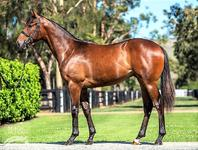 RUBICK colt has pedigree and looks to match!