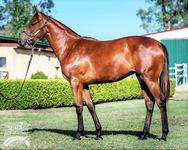 Close relation to Guy's ROCHA joins Proven Thoroughbreds