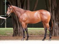 HINCHINBROOK and SO YOU THINK colts join Proven Thoroughbreds