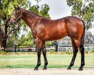 Proven Thoroughbreds buys close relation to Cox Plate winner