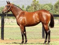FOXWEDGE filly concludes Proven's business at Inglis Classic Sale