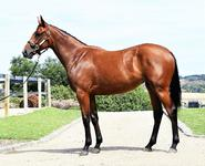 Stunning ZOUSTAR filly wraps up Inglis Premier Sale