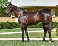 Half-sister to G1 performer from Inglis Premier!